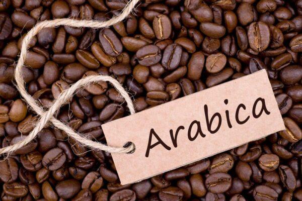 دان قهوه عربیکا