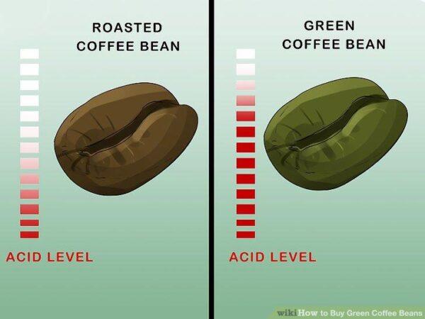 اسید های موجود در دان سبز قهوه