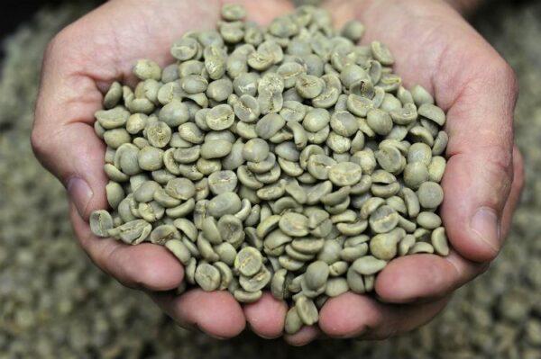 دان سبز قهوه