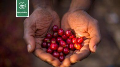 Photo of قهوه اوگاندا : ویژگی ها و تاریخچه قهوه در کشور اوگاندا