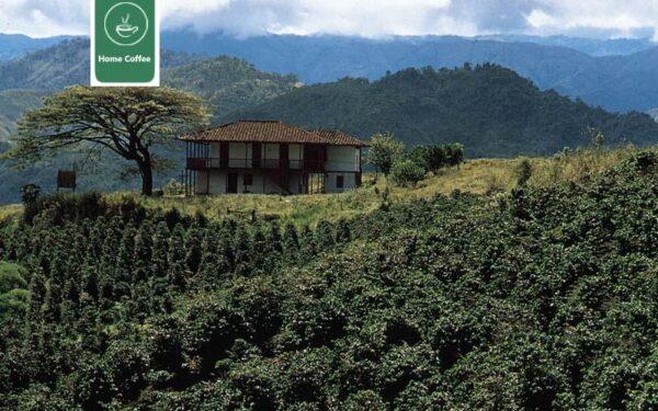 مزارع قهوه گواتمالا