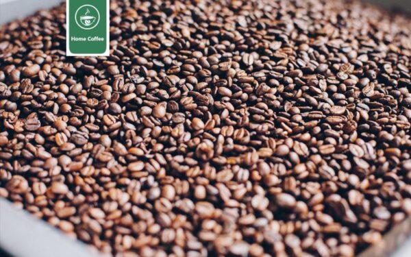 فراوری قهوه هند
