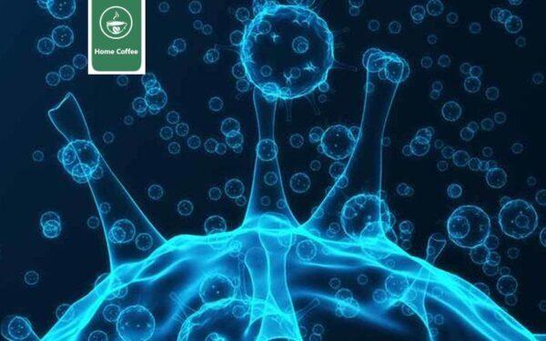 چرخه تکثیر ویروس