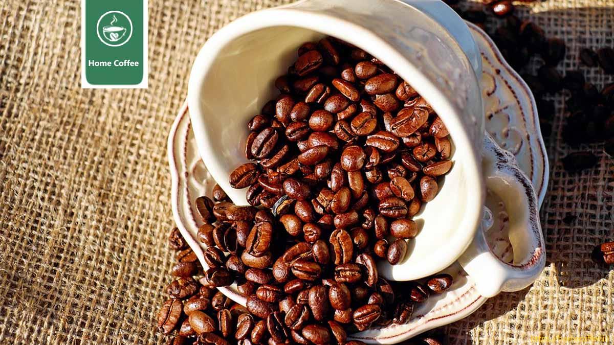 دان قهوه کنیا